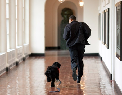 http://news.nationalgeographic.com/news/2009/04/images/090414-obama-dog-picture_big.jpg