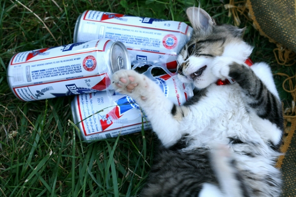 CAt and PBR
